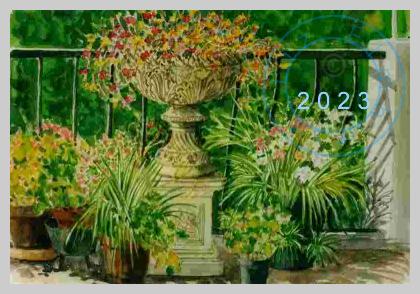 Judy's terrace