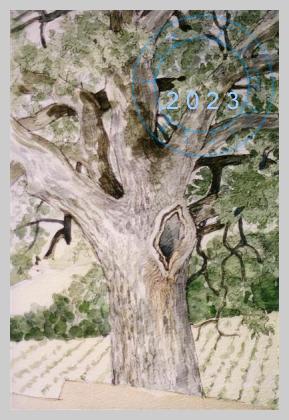 Old tree, Italy