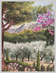 Olive grove in St Remy